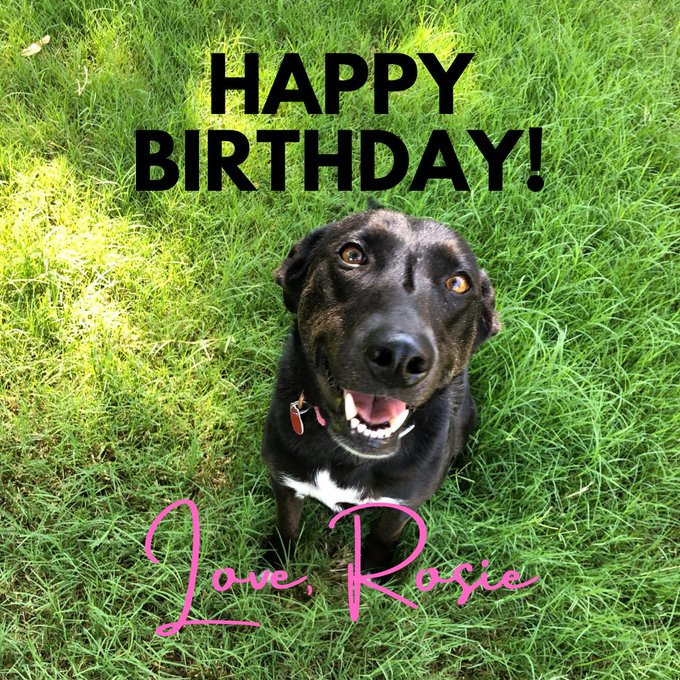 Happy furrst birthday! You are a big boy now! -Rosie