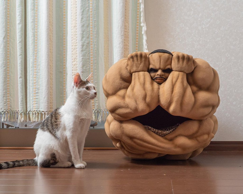 使う猫を選ぶ?ビスケット・オリバの猫かご!
