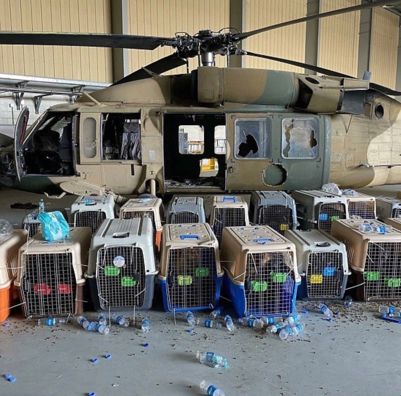 הצבא האמרקאי נטש 51 כלבים בכלובים למות מרעב וצמא בתוך כלובים סגורים בבסיסים באפגניסטאן E-FZaAKVcAQ02V-?format=jpg&name=medium