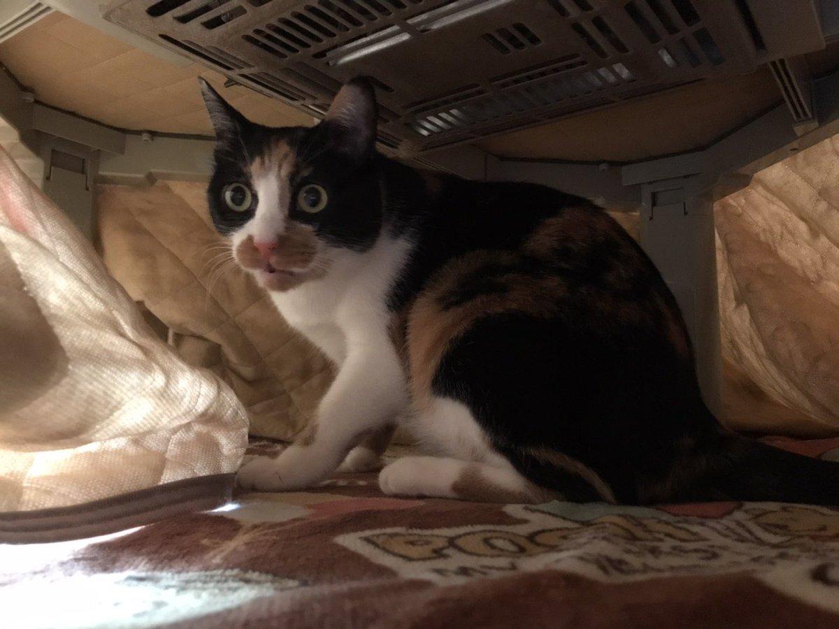 足裏の感触によって?猫がトイレと間違える事故が起きる!