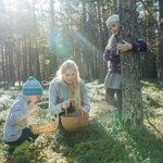 Image for the Tweet beginning: 🍓 Estonian #pickingseason is here!!!🍄  Picking