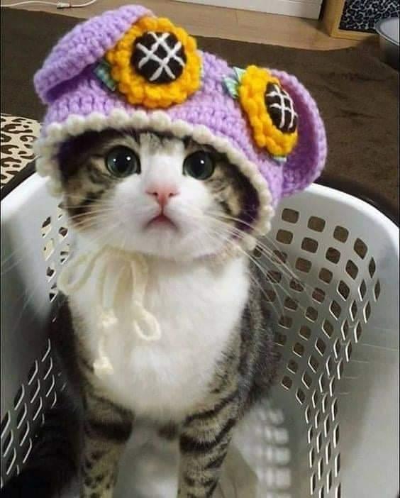 Уже холодно без шапки!