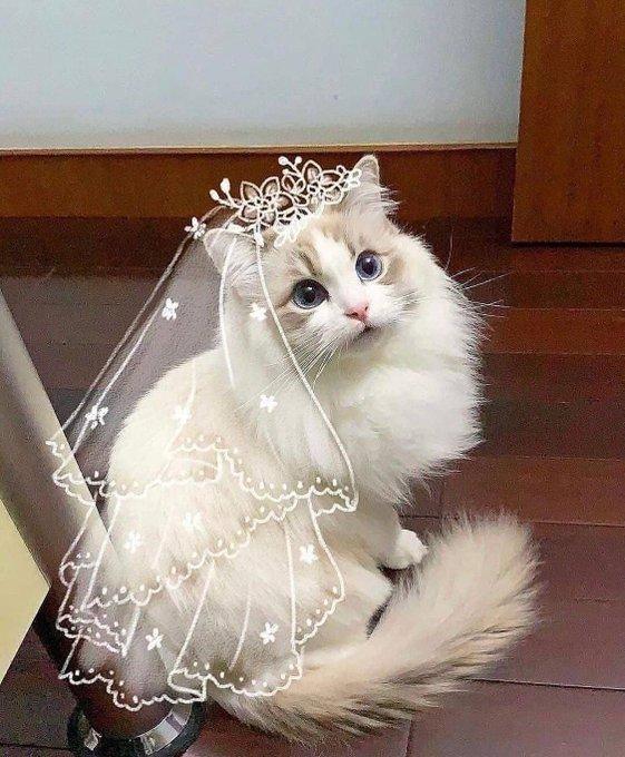 Невеста готова!