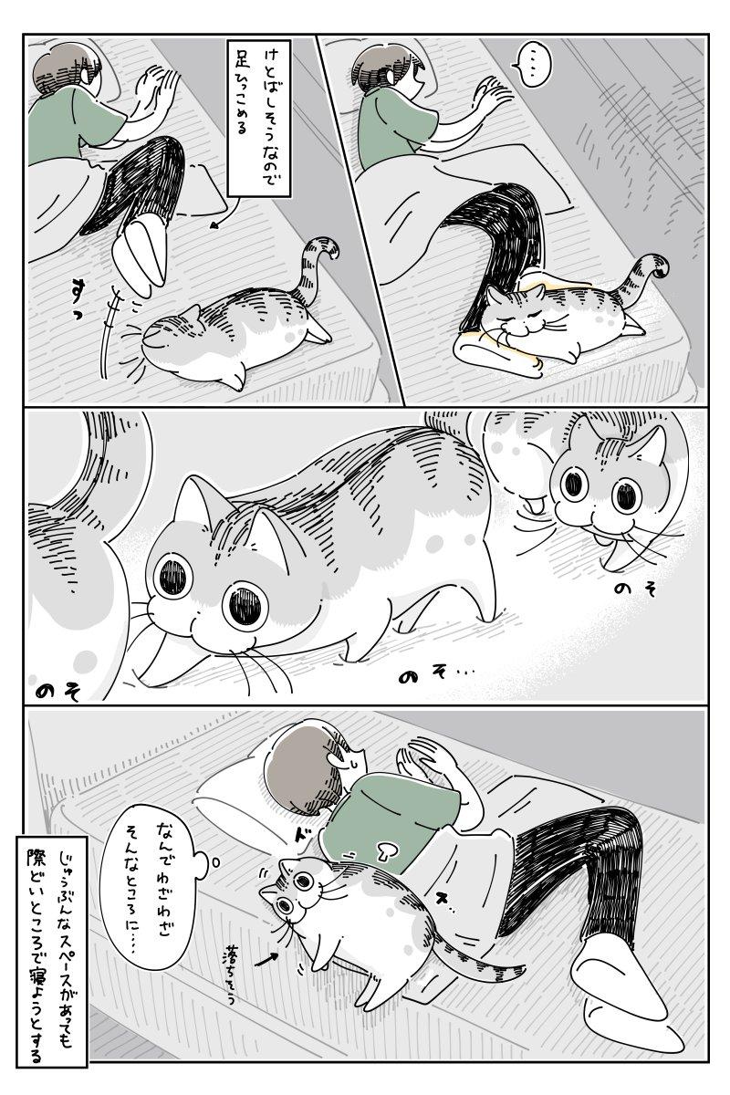 猫あるある?「どうしてそんなところで」と思ってしまうような場所で眠る猫のお話!
