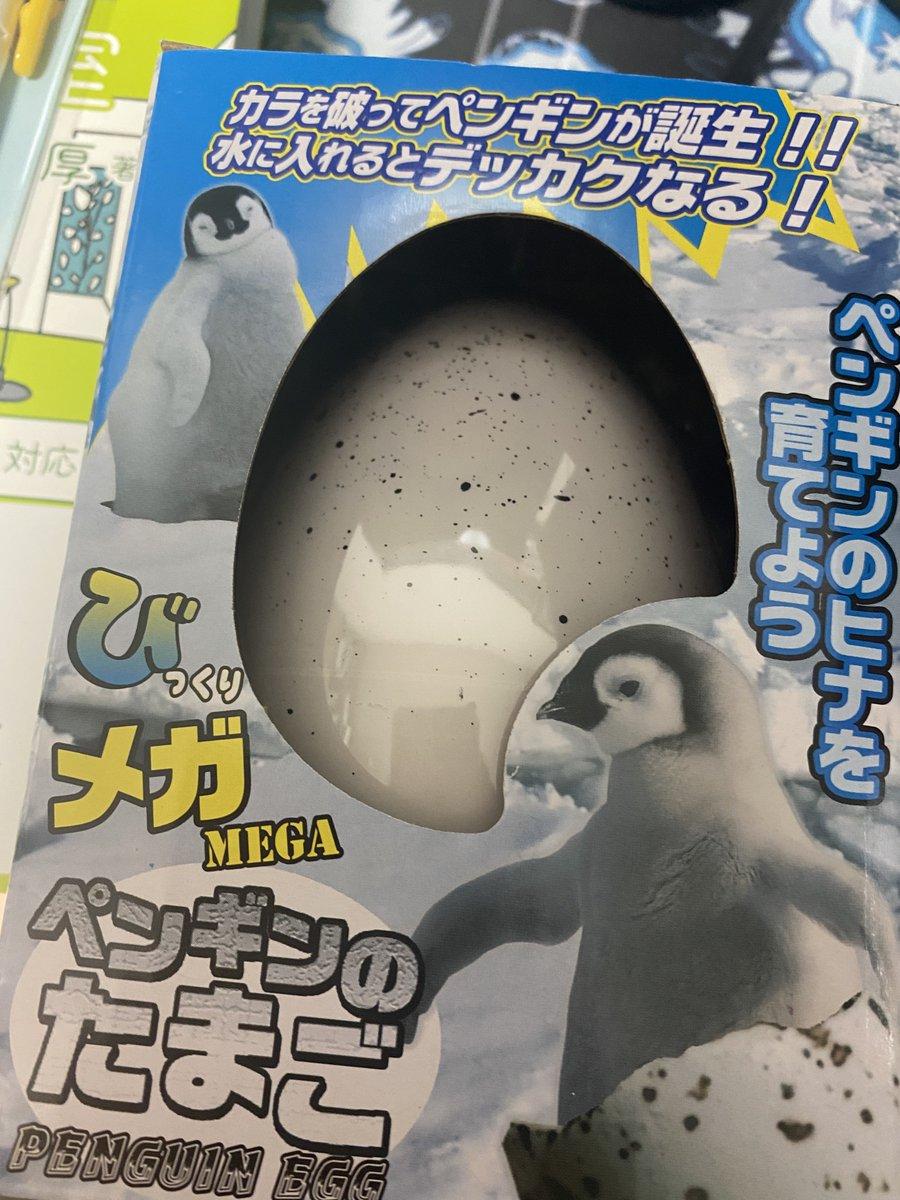 ペンギンの卵からヒナが出てくる!?誕生したものがキモすぎる!