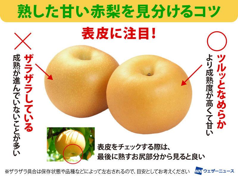 本格的な秋になる前に知っておきたい?美味しい梨の見分け方!