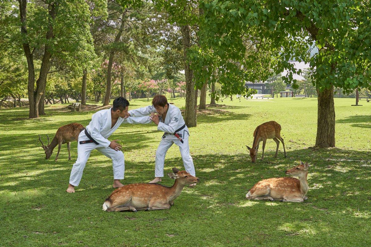 合成にしか見えない?奈良公園で柔術しているところを撮る仕事の様子!