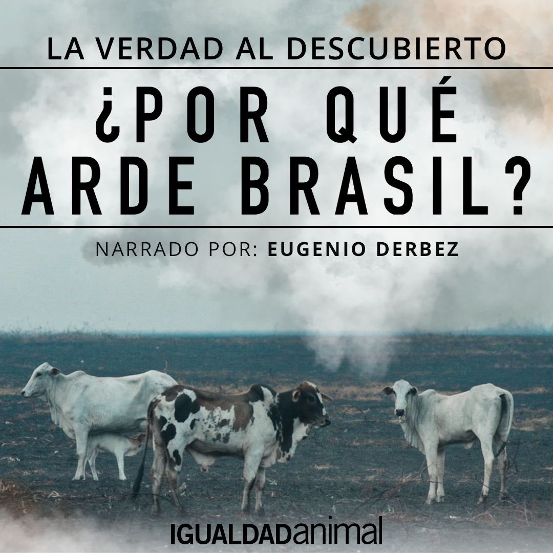 Incendios intencionados, actividades ilegales y crueldad animal en Brasil. Hay una industria que está matando nuestro planeta. Te invito a ver y compartir el documental de @IA_mexico , el cual narré. Ayudemos a terminar con esta destrucción. Firma en https://t.co/FyR07zWnhz https://t.co/JdxOK48Os7