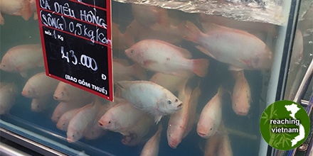 test Twitter Media - Fish to catch in a big tank at the market becomes rare these days, as lock down measures continue. #pray4vietnam https://t.co/qK7gmao4zI https://t.co/tCaUleXSOZ