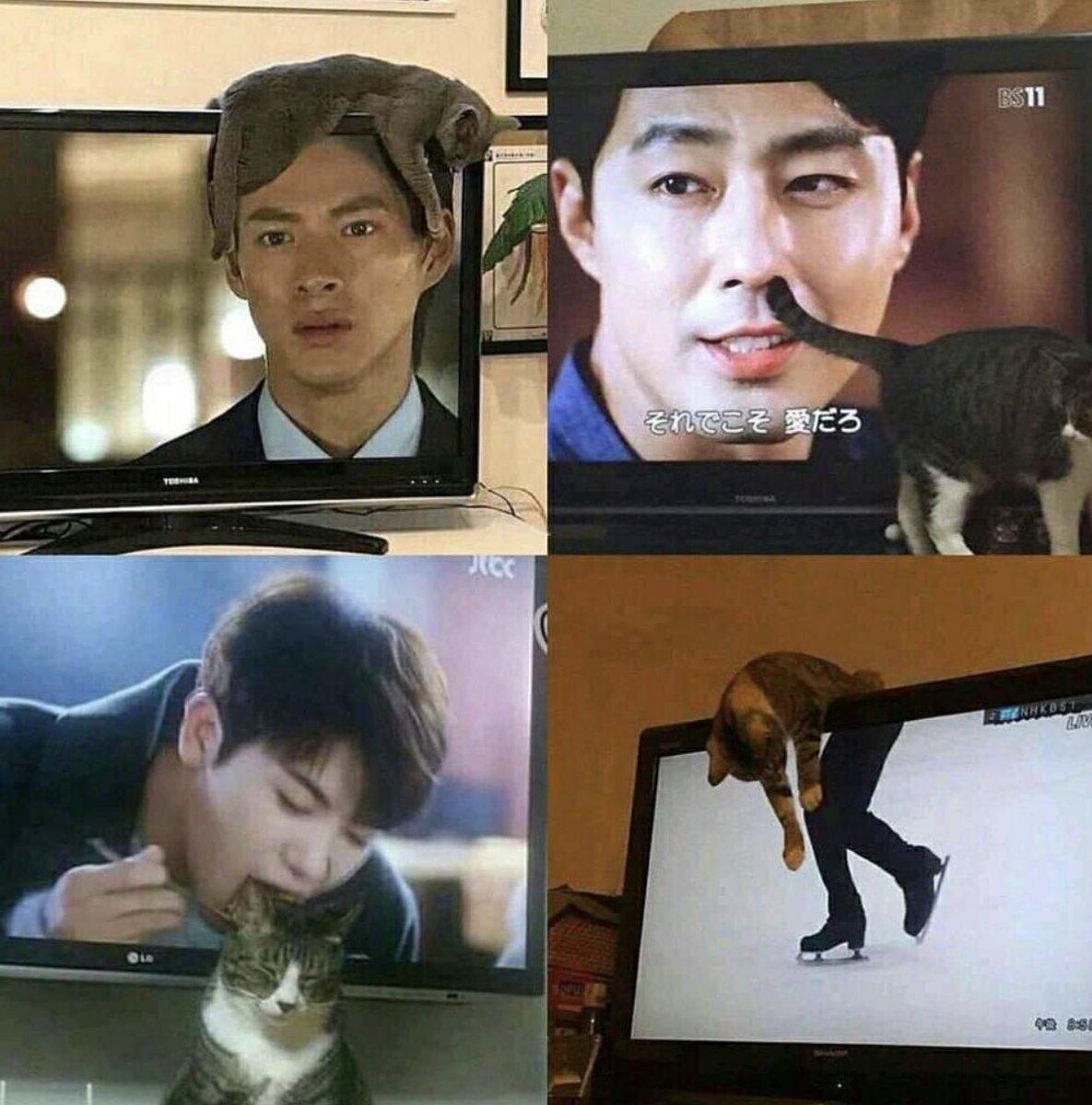 おもしろい偶然。テレビの映像と奇跡的に重なってしまった猫達。
