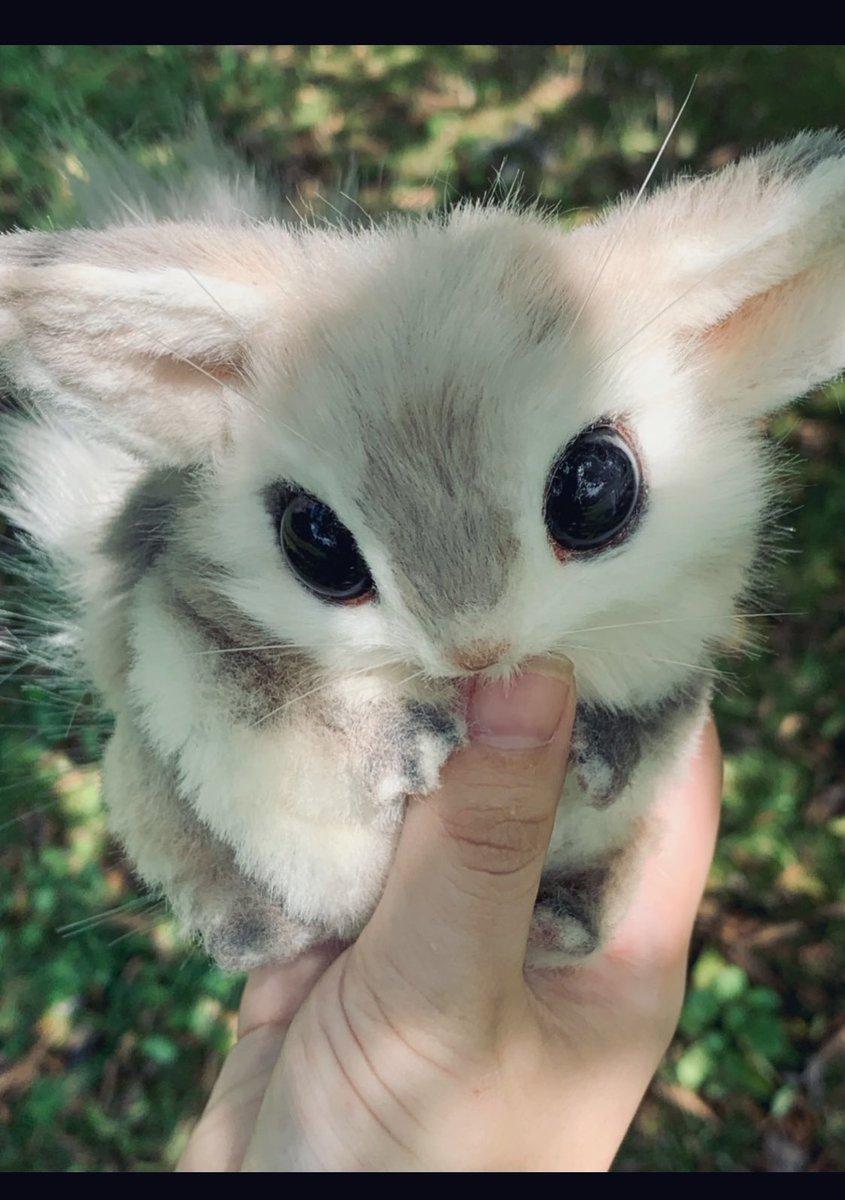 近所の森にエゾモモンガのようなリスのような不思議な小動物がいました! 普通に手に飛び乗ってくるのはあまりにも警戒心がない…どうやって野生で暮らしているんだろう