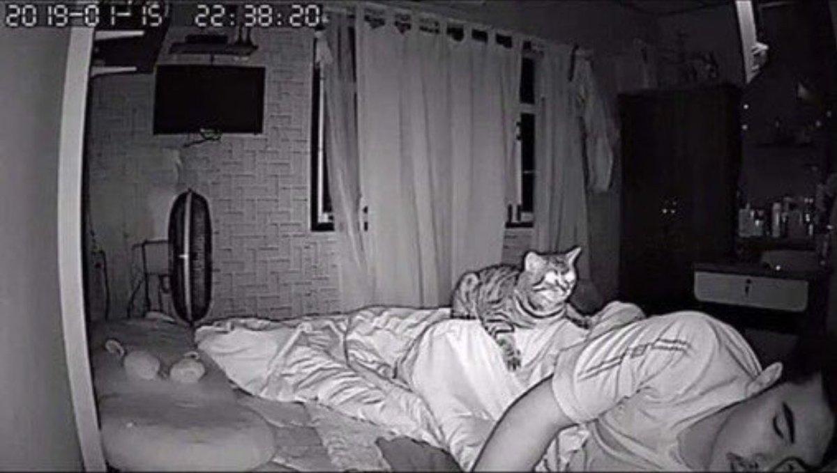 深夜の猫の行動!家族の上に乗ってみたり家族の愛情を感じている猫!