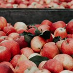 Fun fact: it takes about 36 apples to create one gallon of apple cider. Also, there are more than 2,500 varieties of apples grown in the United States, and they come in all shades of red, green and yellow.  Where's your favorite cider mill in Michigan?