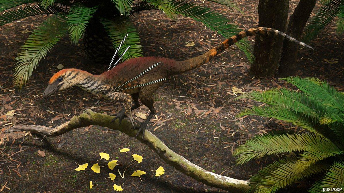 A reminder: #UbirajarabelongstoBR #decolonizepaleontology