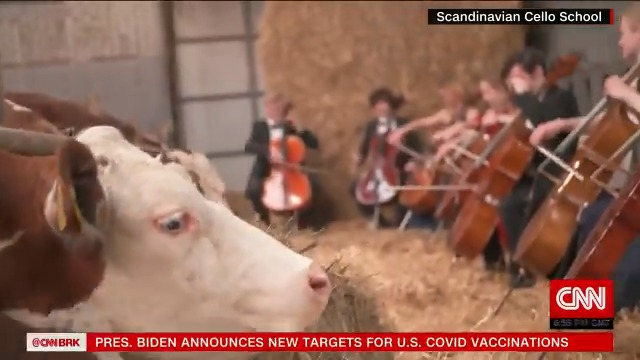 Students from the Scandinavian Cello School in Denmark found a unique way to give a concert by performing for cows https://t.co/igLsEdybiF https://t.co/pBzverUMw7