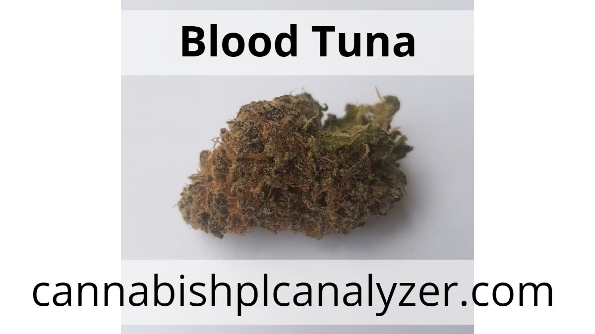 cannabistest1: Blood Tuna Strain Highest Measured Values Total THC 21.26% Total CBD <0.02% Total CBG 0.50%  #CannabisCommunity #cannabisbusiness #cannabis #cannabisindustry #Mmemberville #cbd #Hemp #cannagrower #hempoil #shatter #mmj #hash #enjoy
