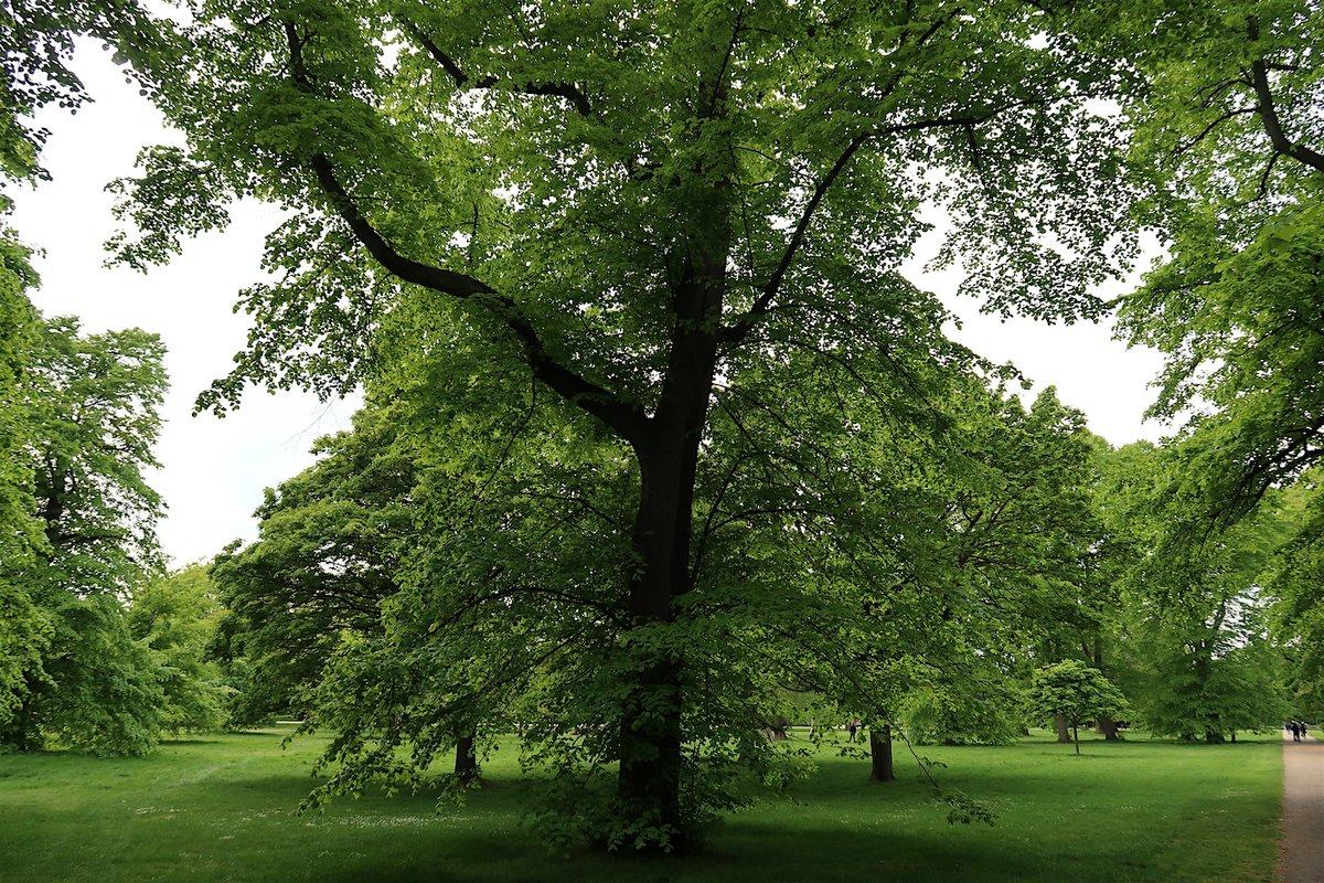 Day 1,458 (Year 4, Day 362) - Trees in Kensington Gardens in #Bayswater, #London #W2, May 7, 2019 https://t.co/eWVx5Kx4xc https://t.co/ZHIG6Fth59