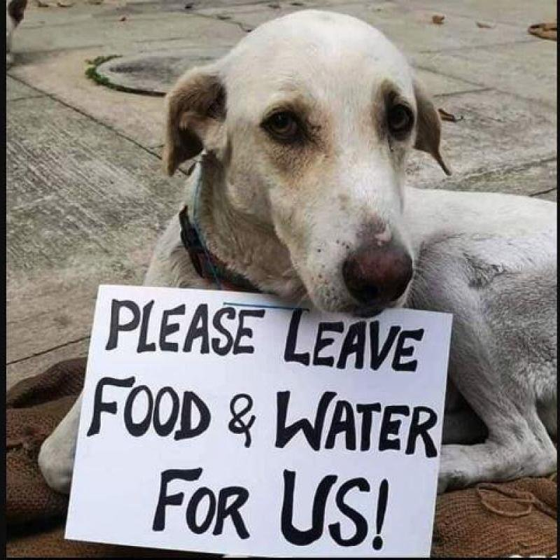 Odisha govt asks civic bodies to feed stray animals during lockdown.  #CovidinIndia #LockdownIndia https://t.co/dapRkMYmf8