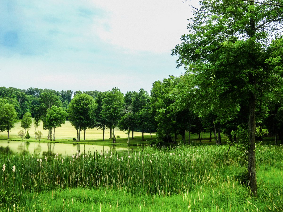 You Will Forget the Sun in His Jealous Sky as we Walk in Fields of Green. Canton, OH. Canon PowerShot SD980 IS. f/4.5. 1/125 ET. ISO-125. Edited in Lightroom and Photoshop. #photography #spring https://t.co/f1461hyqHy