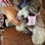 jumokuno0108のサムネイル画像