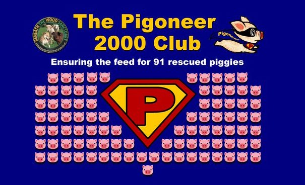 Become a Pigoneer! Help Feed 91 Rescued Pigs for just �2.50 per month. Help Vegans helping Animals for less than the cost of a cup of coffee per month. Im a #Pigoneer Are You? https://t.co/3c8XcuaOrL #vegan #veganshelpingvegans #veganism https://t.co/YDPVwtIMc6