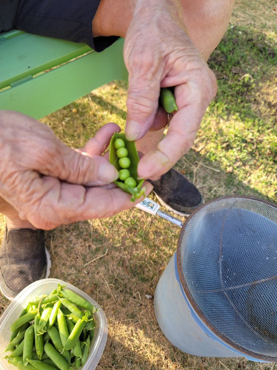 Shelling peas with mom last night. Great crop greater meaning. #memoriesmade https://t.co/vAAcs7iR0A