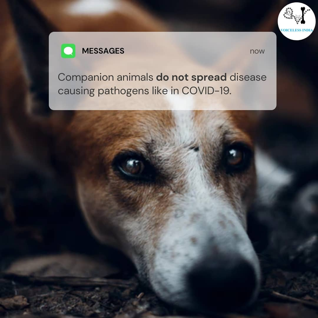 Disease causing pathogens like coronavirus do not transmit from companion animals like dogs, cats, etc to humans. It is disheartening to see the rising cases of animals abandoned because of false rumors like these.  #AnimalAbuse #abandoned #loveanimals #pets #petsarefamily https://t.co/13R7j0vsZh