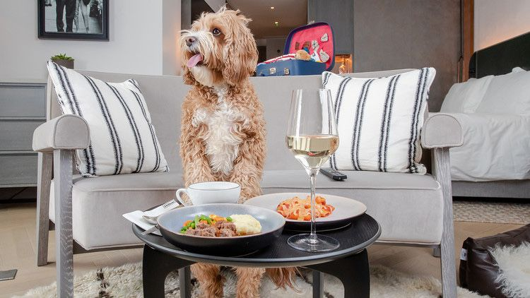 Hilton launches a dog menu for pets who helped their owners through the pandemic and it's incredible! https://t.co/RSmMjA6uwN #pets #Hilton #pandemic #dogsofinstagram https://t.co/2vWXI50fUM