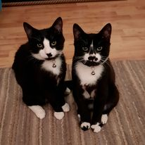@POY_UK Chilli and Pepper, adopted brothers. Love 'em to bits!  #cat @POY_UK #Sheba #ProductOfTheYear #Pets #comp https://t.co/DUPe7bYmAK