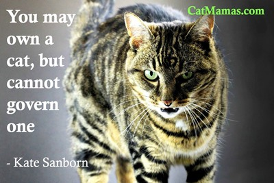 If we didn't like a challenge, we probably wouldn't get a cat! So we must be braver than we think! #pets https://t.co/NPgOb9aHCS