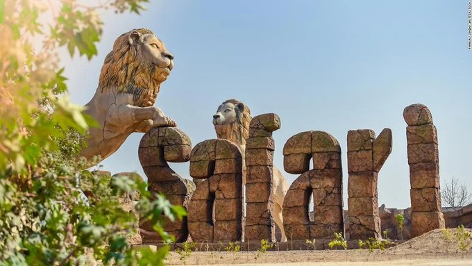 Two lions test positive for Covid-19 at Indian safari park Photo