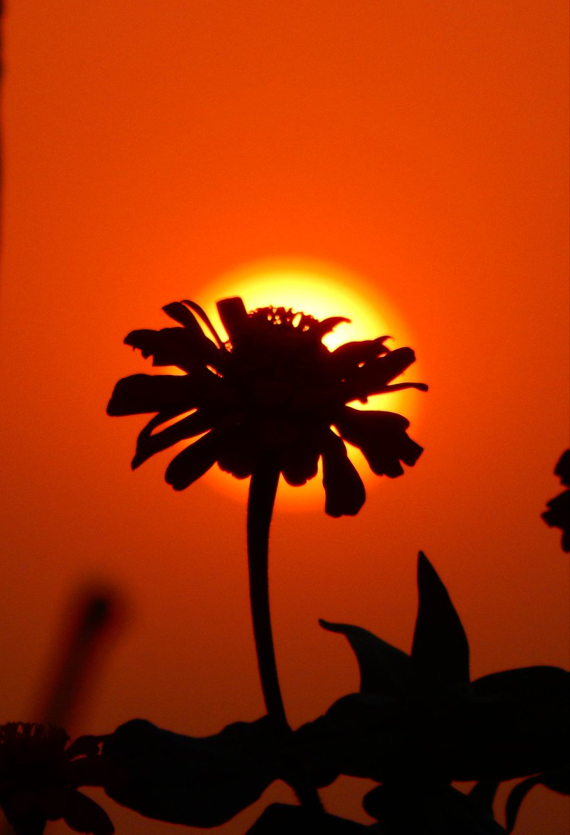 DELHI SUNSET❤  #photo  #nature  #PhotoOfTheDay https://t.co/ejA7v0PUbx