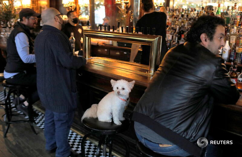 Sally, a 5-year-old Havanese Pomeranian mix, sits at the bar with her owner Matt Friedlander at the White Horse Tavern after coronavirus restrictions eased on indoor drinking in bars in New York City. More photos of the week: https://t.co/sY8w8o6EJV 📷 Andrew Kelly https://t.co/0S4XTKMK4I