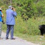 本当にクマが悪いのか?クマが撃たれる原因を作っている人たち!