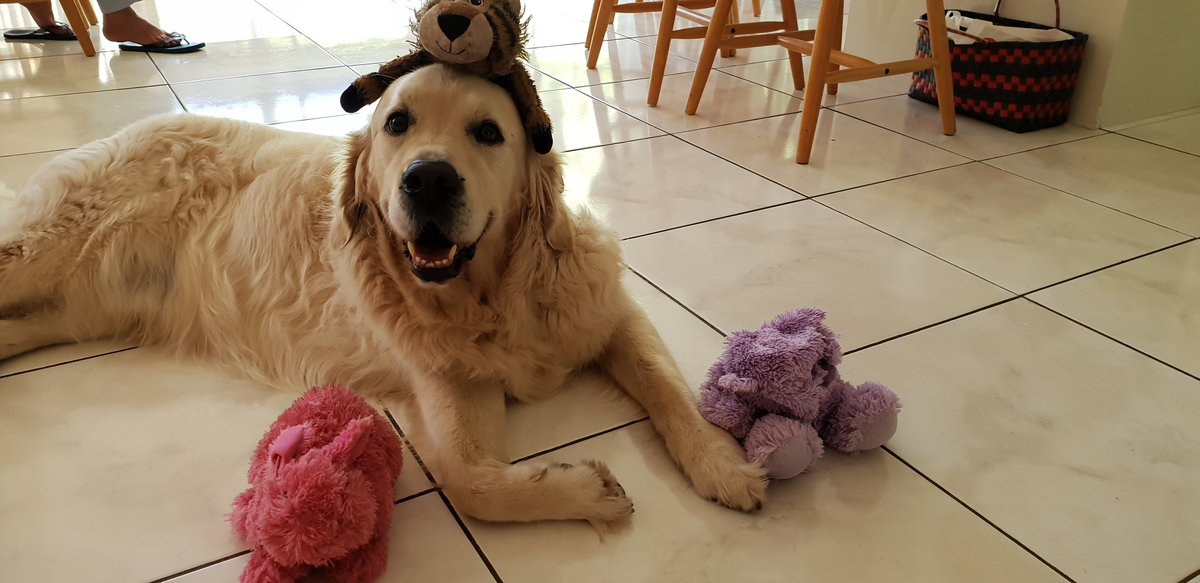 Sorry, did you think I was done? Um, no, we've only just lifted the boot folks. Because even the things that get Shell piles on top of its fossil fuel business are part of the ruse. Thread break -> dog pic
