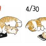 人間も動物も一緒?猫で見るGWの過ごし方!
