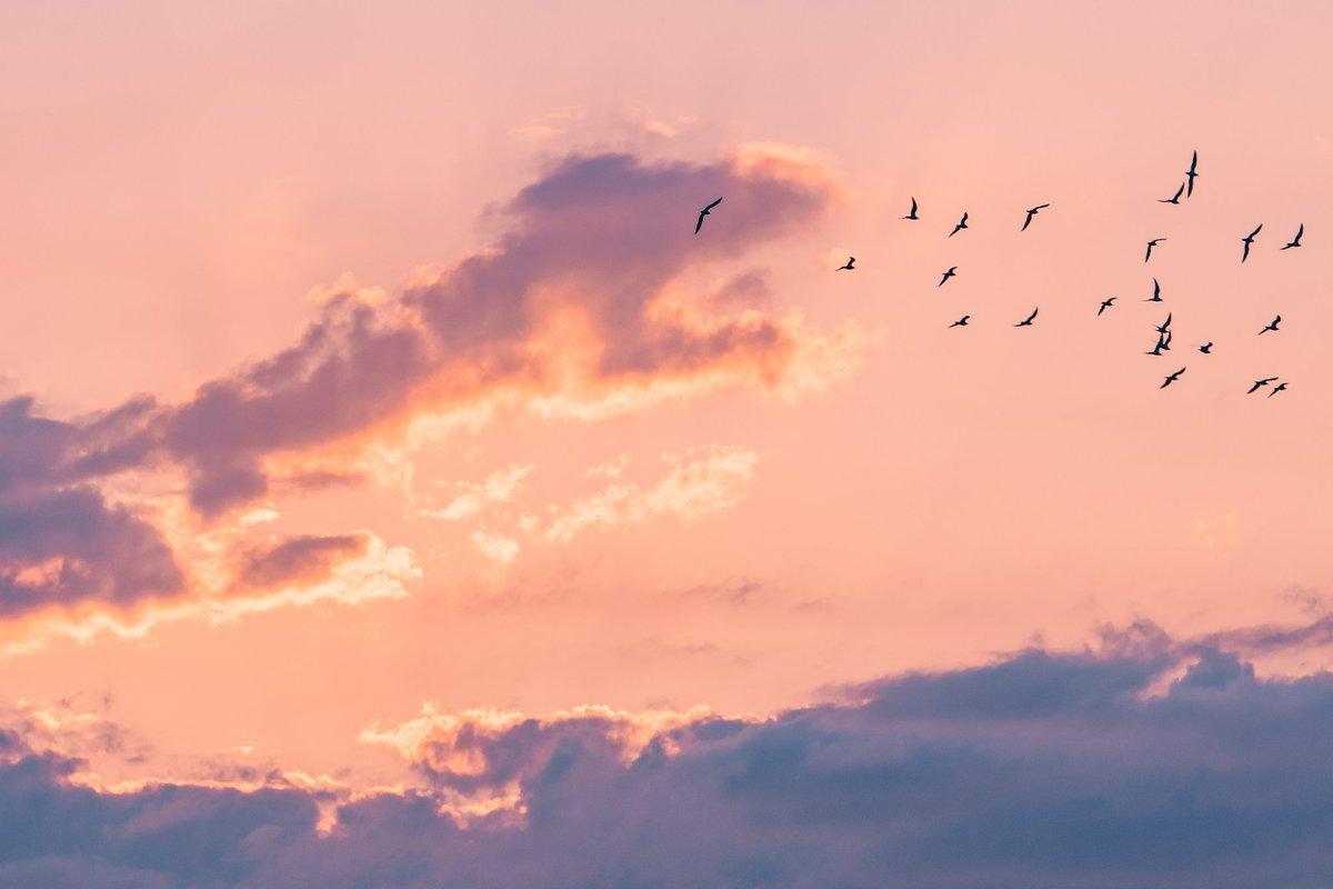 思わず見続けてしまう?空を見上げると動物の形をした雲がたくさんある!