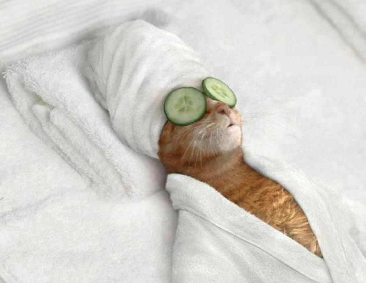 美意識の高い猫様のフィギュアを作ってみました。  来客があってタオルを貸す機会があったらこの子を添えたいと思います。