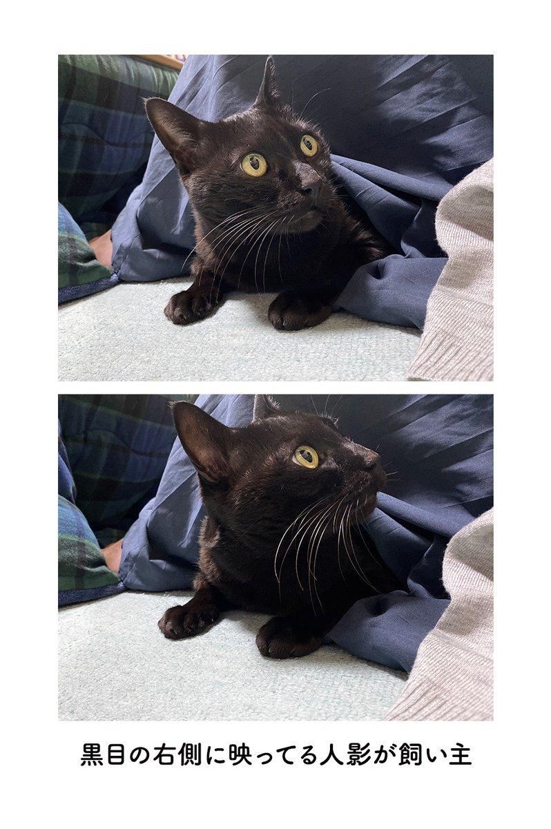 目線をカメラに向けてくれない猫!けれど撮った写真を拡大してあることに気付きほっこり!
