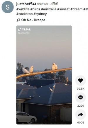 test ツイッターメディア -【大型】オーストラリアで住宅街をオウムが占拠、食糧や水不足などが原因かhttps://t.co/lolsuajSrr住民らは鳴き声による騒音や大量の糞に悩まされているが、このオウムの一種はオーストラリアにおいて保護対象の鳥であり、為す術がないという。 https://t.co/ekpHQjuAle