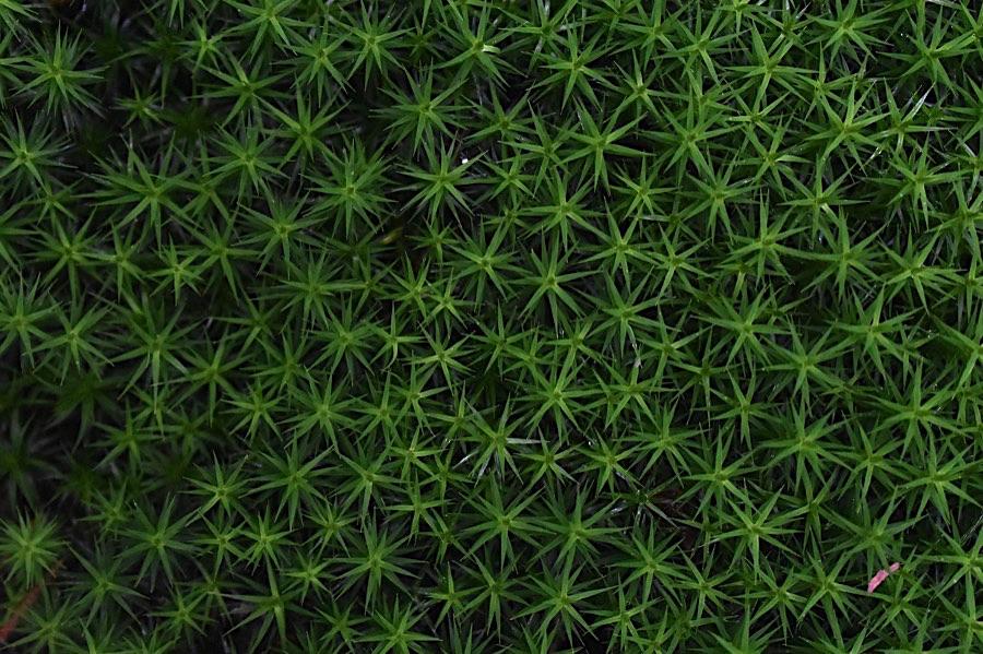 GreenTravelMag photo