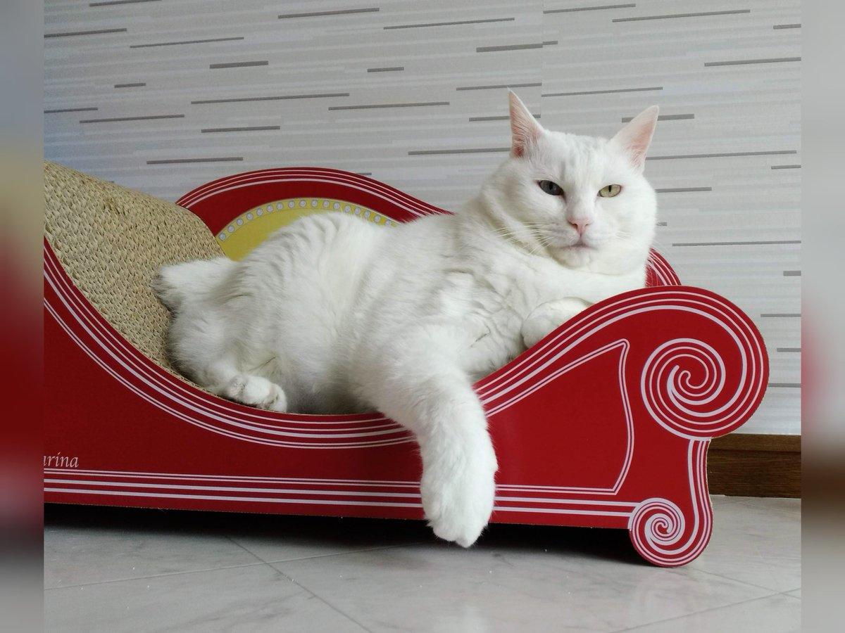 猫を飼っている人にとってはあるある?自由気ままに振る舞う猫とそれに合わせる飼い主の図!