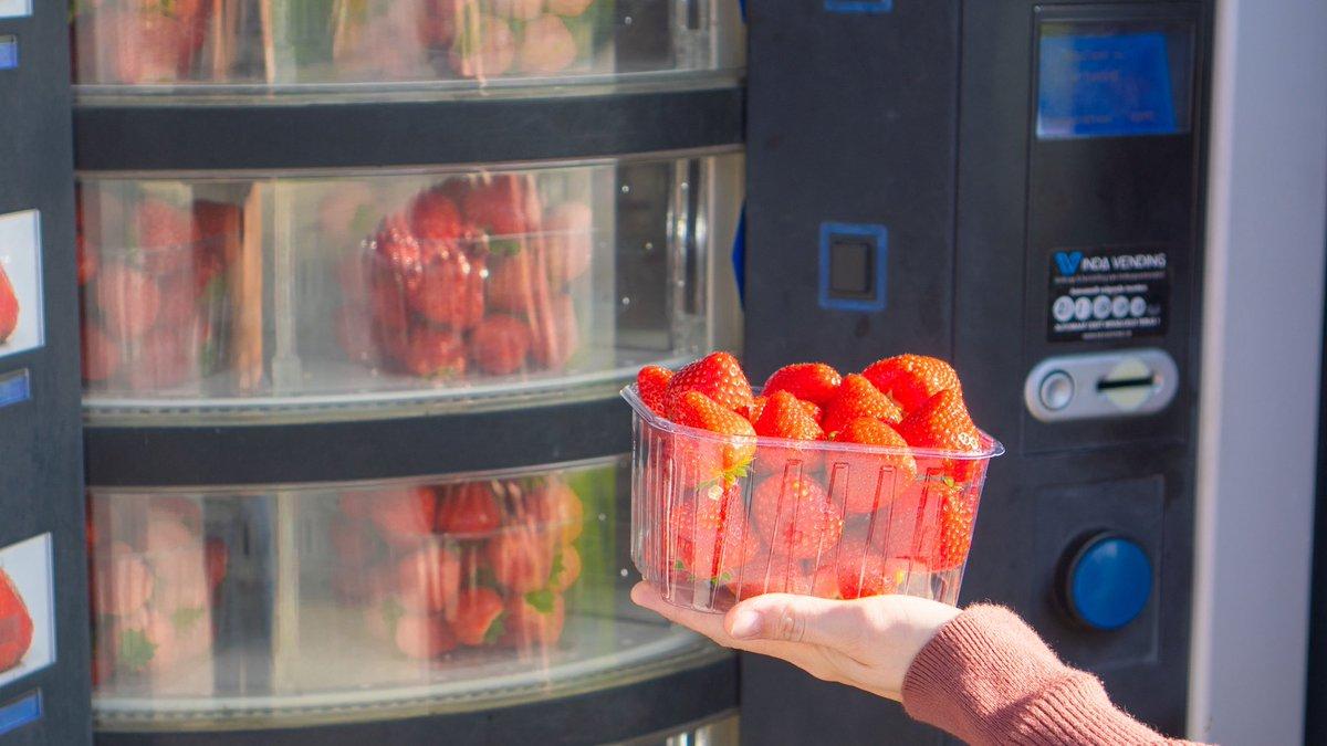 絶望のロックダウン7ヶ月目に突入したベルギーですが、自販機で買える苺が度を越して美味なので幸せに生きてます。