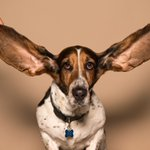 Image for the Tweet beginning: We're all ears so please