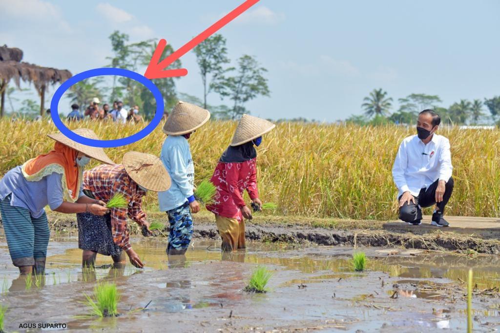 Foto Presiden Joko Widodo (Jokowi) saat meninjau para petani di Malang.