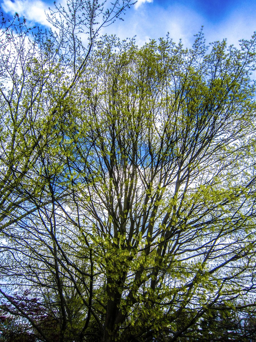 Green Arms Grow. Massillon, OH. Canon PowerShot SD980 IS. f/4. 1/500 ET. ISO-80. Edited in Lightroom. #photography #spring https://t.co/q33Xj2bEmc