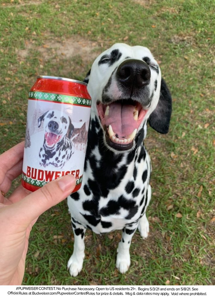 Budweiser is looking for a dog to be the face of their next can! We figured we could help with that. Post a pic of your pup with #PupweiserContest and tag @budweiserusa for a chance to win! #ad https://t.co/a3xF8DPF3A