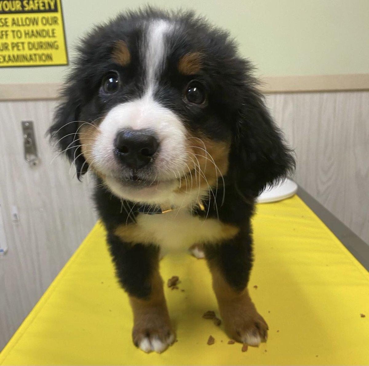 @dog_rates's photo on Iroh