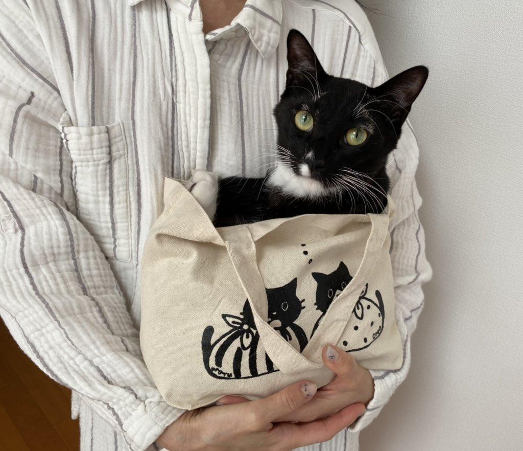 こちらのランチトートは猫を持ち運ぶのに最適なサイズ感です