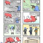 麻酔銃の理想と現実!どうしてクマになかなか麻酔銃を使えないかを漫画で解説!!